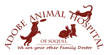 Adobe Animal Hospital of Soquel