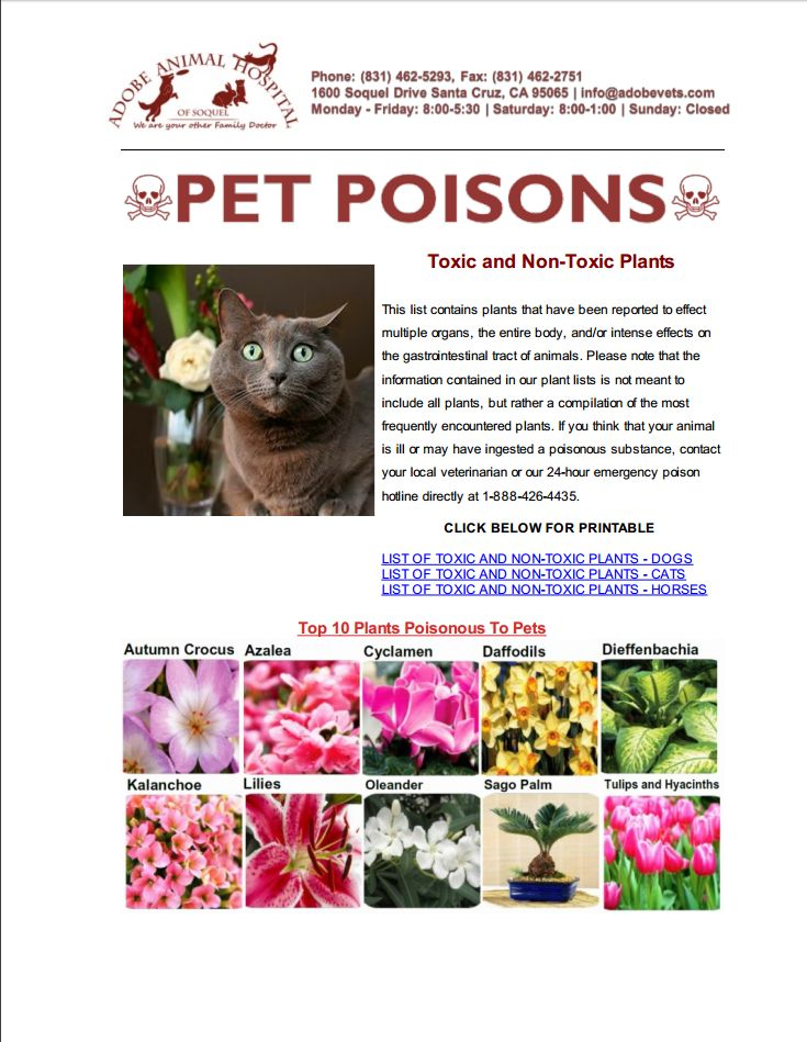 pet poision newsletter