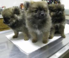 resized 225x190 pups 1