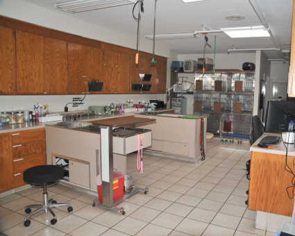 """Our treatment area with two """"wet"""" tables to perform dentistries and other procedures."""